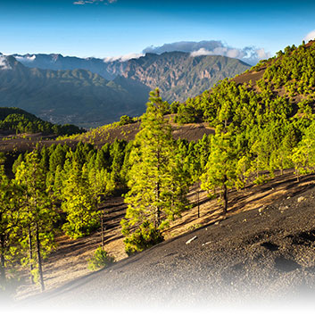 La Palma Image